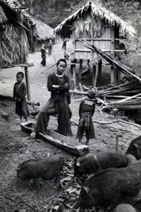 Typical Hmong Village In Laos, before and during the war, Hmong traditionally lived in high elevation (above 3,000 feet). Aside from their slash-and-burn agrarian lifestyle, many families also raised domestic animals, including chickens and pigs. These children made sure the livestock were fed and tended. (Noah Vang Collection)